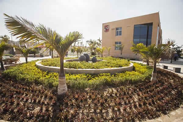 المبنى الإجتماعى النادى الاهلى فرع الشيخ زايد 9