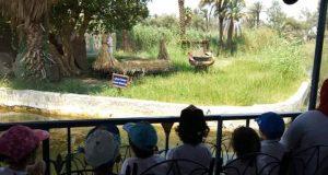 رحلة اعضاء نادى الصيد فى القرية الفرعونية