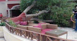 سقوط شجرة في نادي الطيران تتسبب في وفاة احد الاعضاء