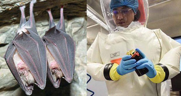 مختبر ووهان وابحاث علي الخفافيش مصدر فيروس كورونا
