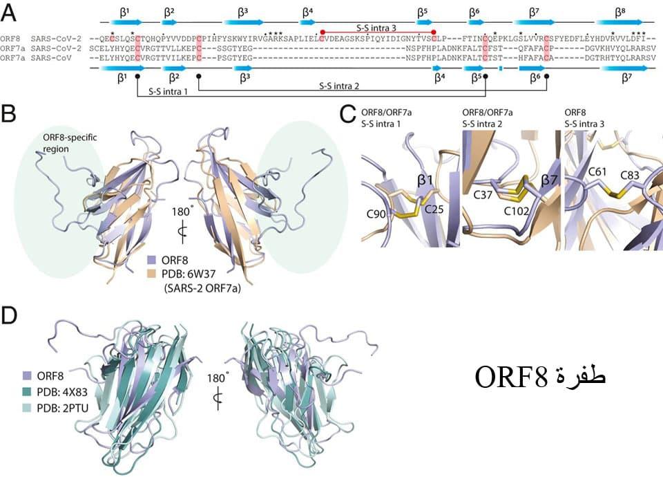 طفرات سلالات فيروس كورونا الجديدة
