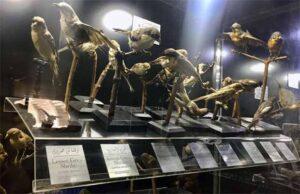 طيور المتحف الحيواني حديقة حيوان الجيزة