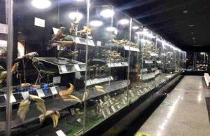 طيور المتحف الحيواني