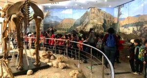 متحف الحيوان في حديقة الحيوان بالجيزة