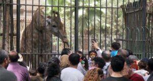 حديقة الحيوان بالجيزة